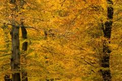2017-11-18-Treek-Herfst-050