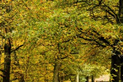 2020-10-31-Den Treek-003-Edit